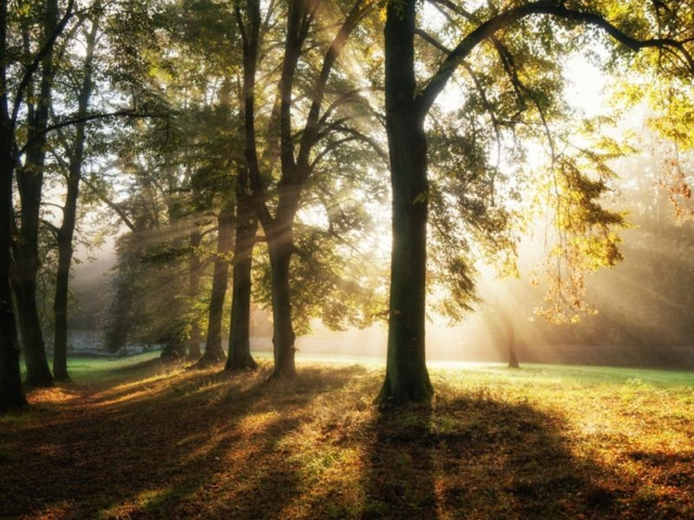 Sonnenstrahlen am Morgen