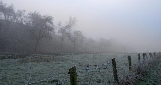 Ziegenweide an Nebelwölkchen